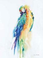 Colorful Parrots II Framed Print