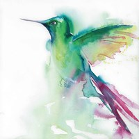 Hummingbirds III Framed Print