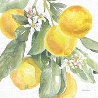 Citrus Charm Lemons II Fine Art Print