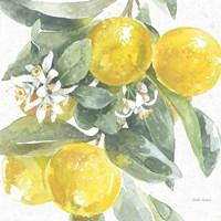 Citrus Charm Lemons I Fine Art Print