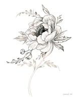 Sketchbook Garden VIII BW Framed Print