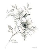 Sketchbook Garden VII BW Framed Print