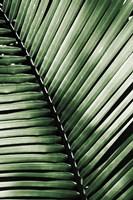 Palm Frond I Green Fine Art Print