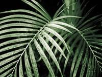 Palm Fronds Green Fine Art Print