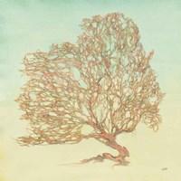 Sea Fern I Fine Art Print