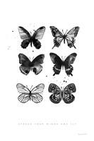 Six Inky Butterflies Fine Art Print