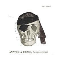 Dandy Bones VI Pirate Fine Art Print