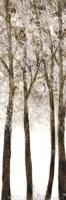 Wooded Grove 1 Framed Print