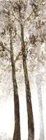 Wooded Grove 2 Framed Print
