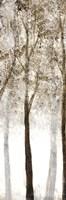 Wooded Grove 3 Fine Art Print