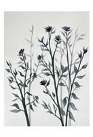 Botanical Inspiration 2 Framed Print