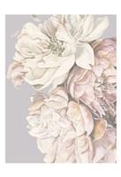 Soft Peonies Fine Art Print