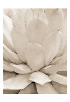 Agave Neutral 1 Fine Art Print
