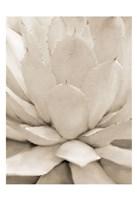 Agave Neutral 1 Framed Print