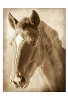 Wild Stallion 1 Fine Art Print