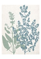Linen Herbs 2 Fine Art Print