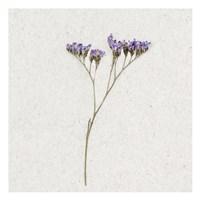 Dainty Purple 1 Framed Print