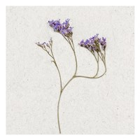 Dainty Purple 2 Framed Print