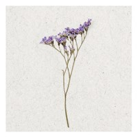 Dainty Purple 3 Framed Print