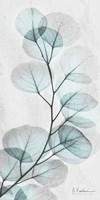 Eucalyptus Glow 1 Framed Print