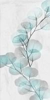 Eucalyptus Glow 2 Framed Print
