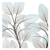 Sandy Blooms 1 Framed Print