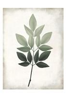 Vintage Botanical Greens 1 Framed Print