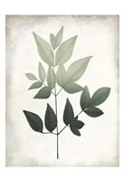 Vintage Botanical Greens 2 Framed Print