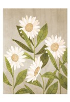 Daisies 1 Framed Print