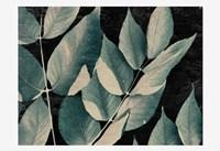 Dusty Leaves 1 Fine Art Print