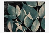 Dusty Leaves 2 Framed Print