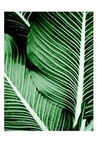 Tropical 1 Framed Print