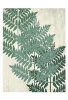 Fern 1 Greens Fine Art Print