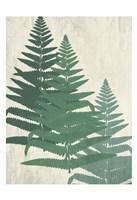Fern 2 Greens Fine Art Print