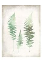 Watercolor Fern 1 Vintage Framed Print