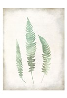 Watercolor Fern 3 Vintage Framed Print