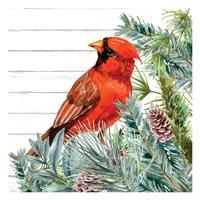 Winter Birds 2 Framed Print