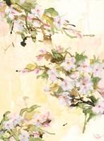 Cherry Blossoms Fine Art Print