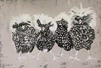 Polish Chickens Fine Art Print