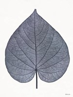 Indigo Nature Study I Framed Print