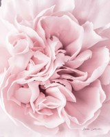 Pink Carnation Crop Fine Art Print