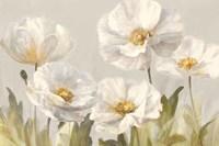 White Anemones Framed Print