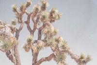 Desert Floral I Fine Art Print