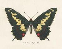 Natures Butterfly VI Framed Print