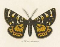 Natures Butterfly V Framed Print