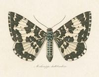 Natures Butterfly II Fine Art Print