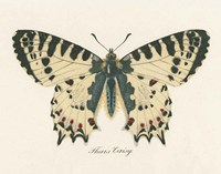 Natures Butterfly I Fine Art Print