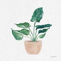 Home Garden III Framed Print