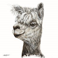 Alphie the Alpaca Fine Art Print