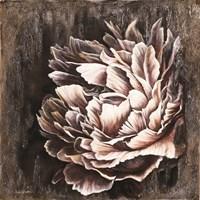 Pale Peony Fine Art Print